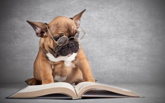 Dogs-Reading-Book-2013-e1412098927242
